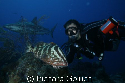 Diver with Nassau Grouper and Caribbean Reef Shark-Canon ... by Richard Goluch 